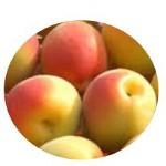 梅ジュースには完熟それとも青梅?梅のアク抜き時間と保存方法は?