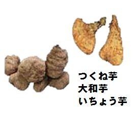違い 自然薯 山芋